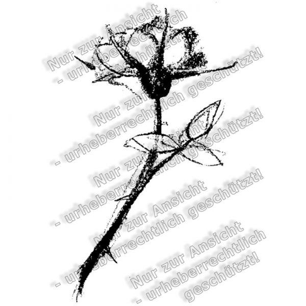 Basiskatalog - 03604