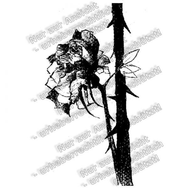 Basiskatalog - 03605